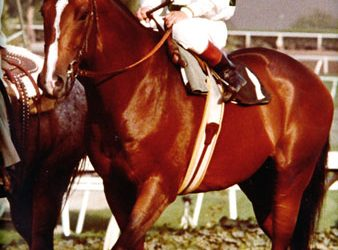 Exceller Meets Seattle Slew in the 1978 Jockey Club Gold Cup