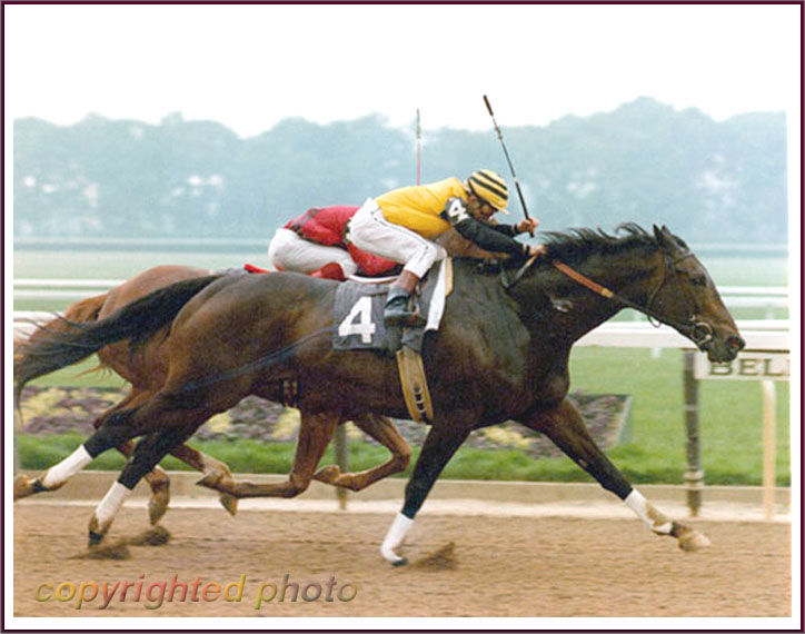 Forego Champion Horse Marlboro Cup 1976