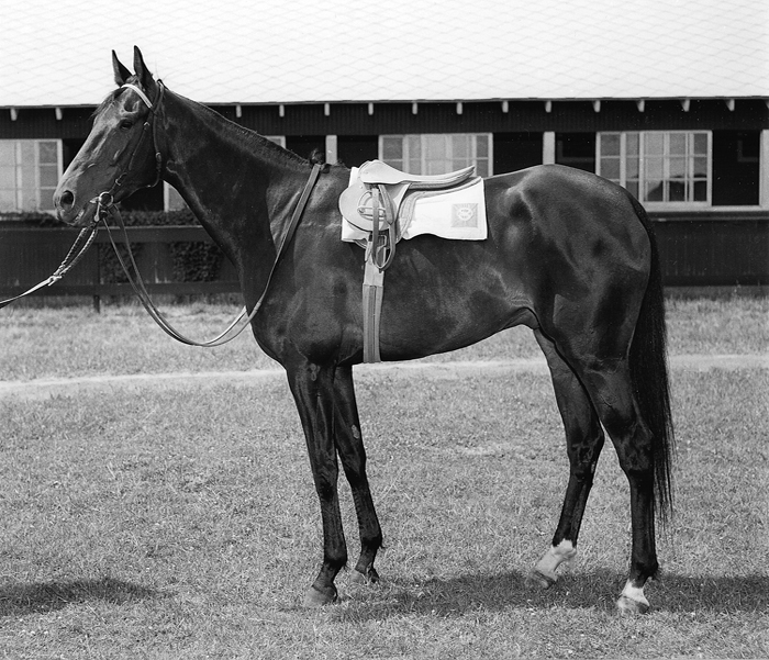 Dark Mirage Champion – First Winner of The Filly Triple Crown | Kelso