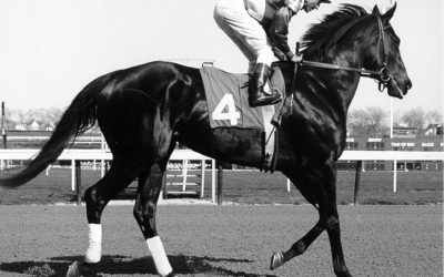 Ruffian Horse Racing Photos