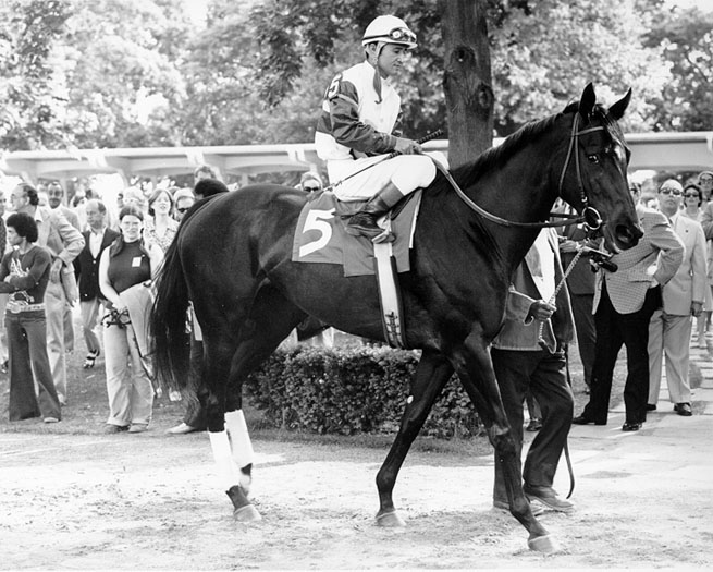 Ruffian Remembered