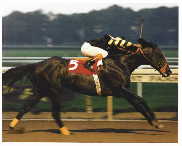 Seattle Slew Undefeated Triple Crown Winner