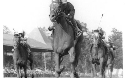 Easy Goer Thoroughbred Racehorse Gallery